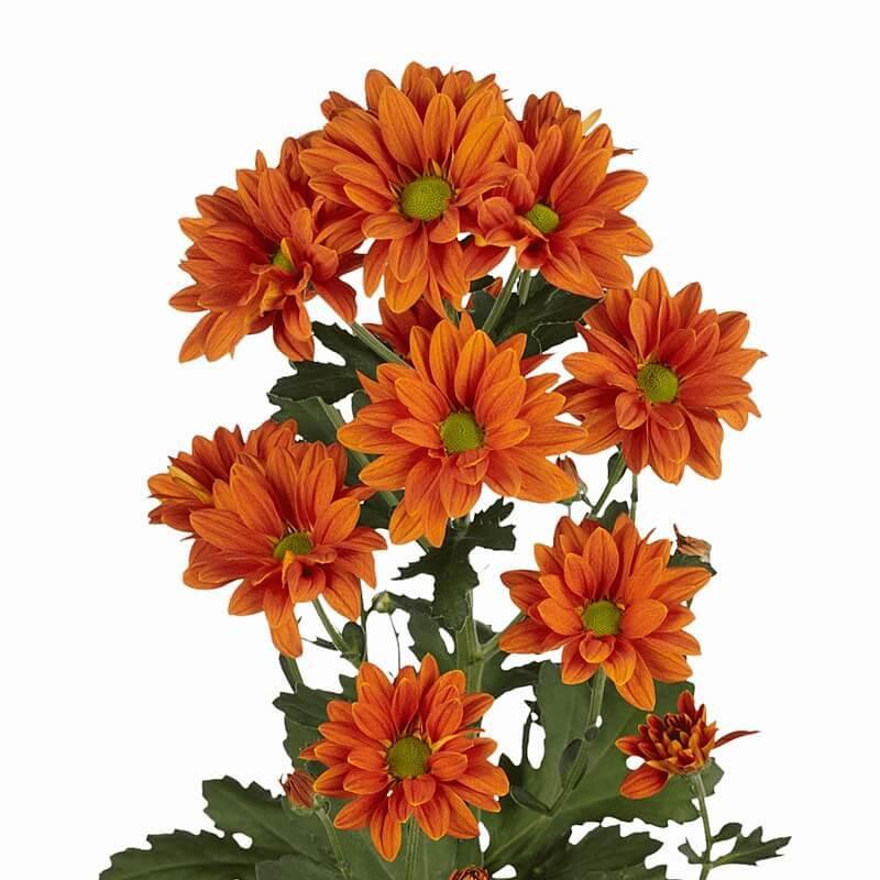 Цветы оптом в оранжевом цвете